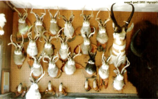 mounted antlers for sale