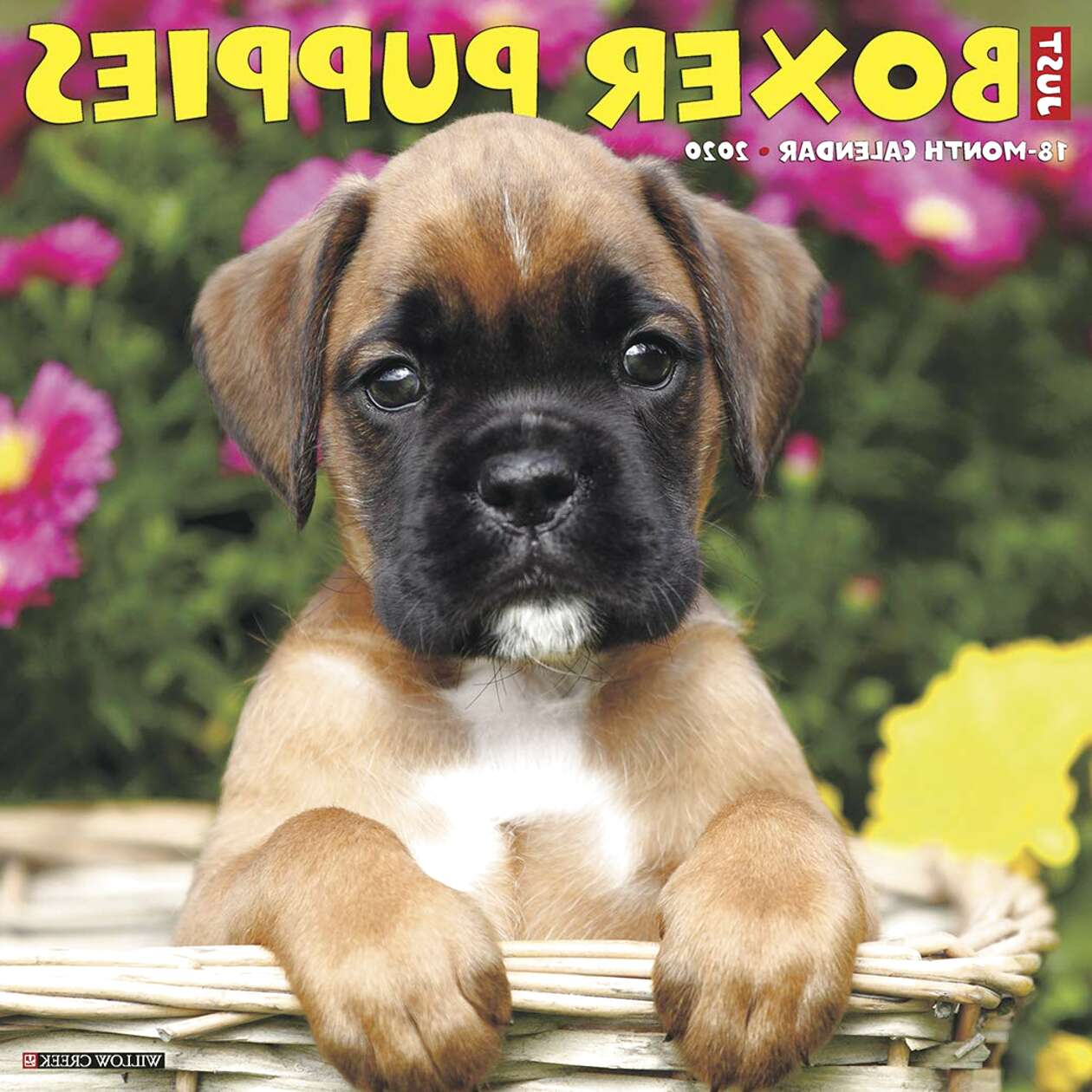 boxer dog puppies for sale