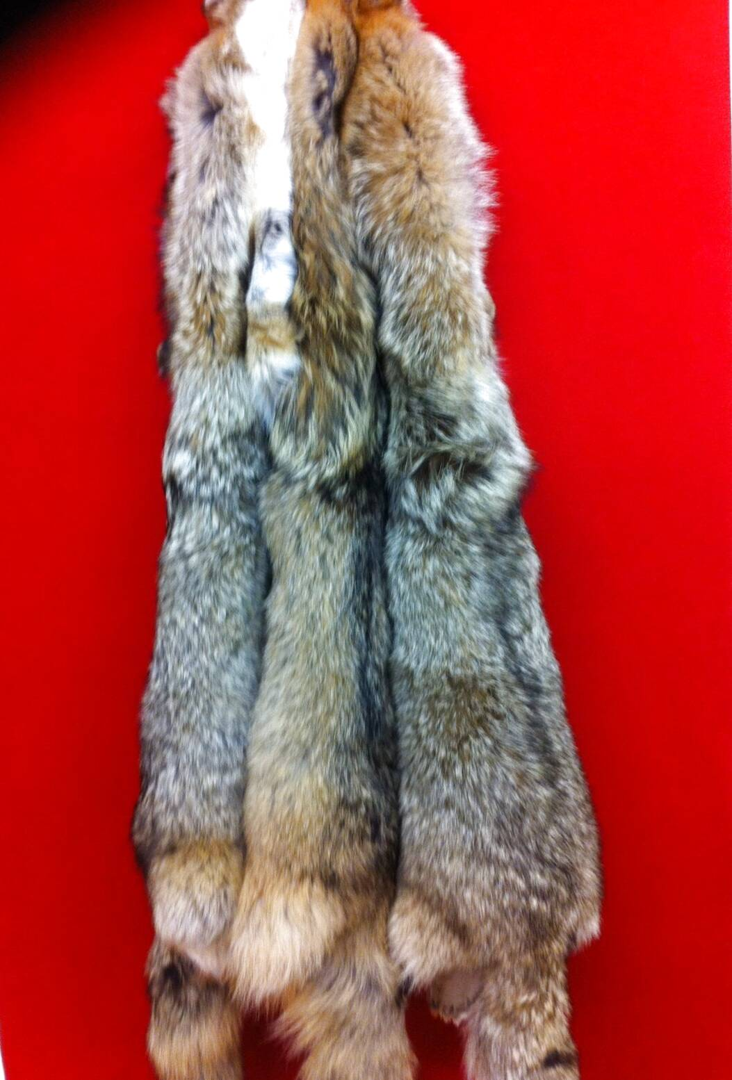 coyote fur for sale