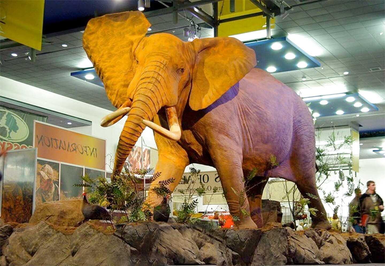 taxidermy elephant for sale