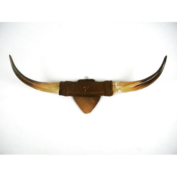 mounted cow horns for sale