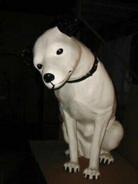 nipper dog for sale