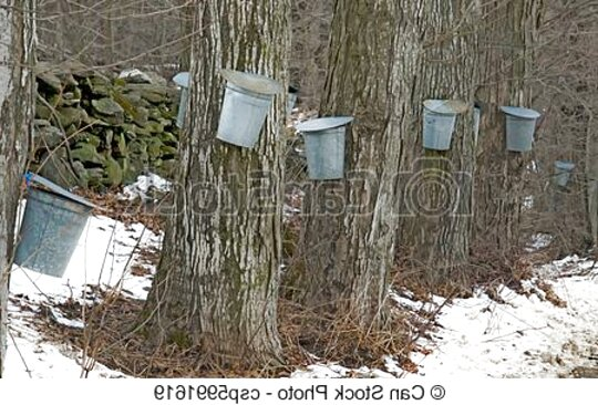 maple sap buckets for sale